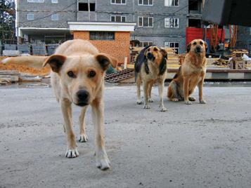 Бездомные псы