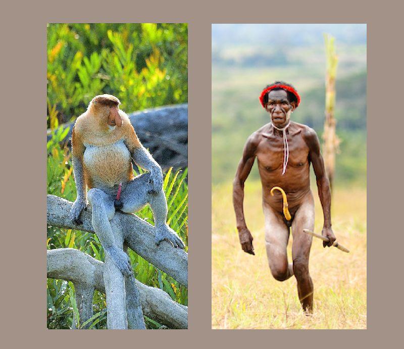 Секс обезьян носачей