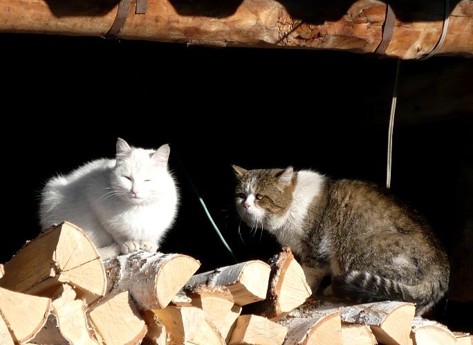 Март_кошки