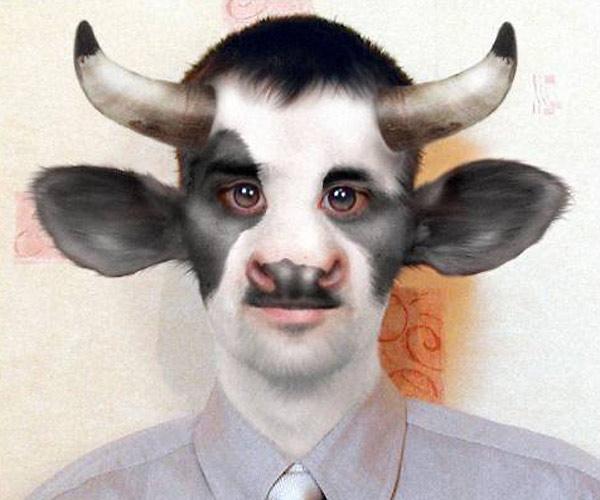 коров