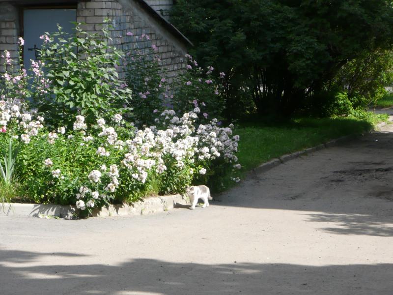 Цветочки во дворе, неизбежная кошка и асфальт, вот такой асфальт во дворах