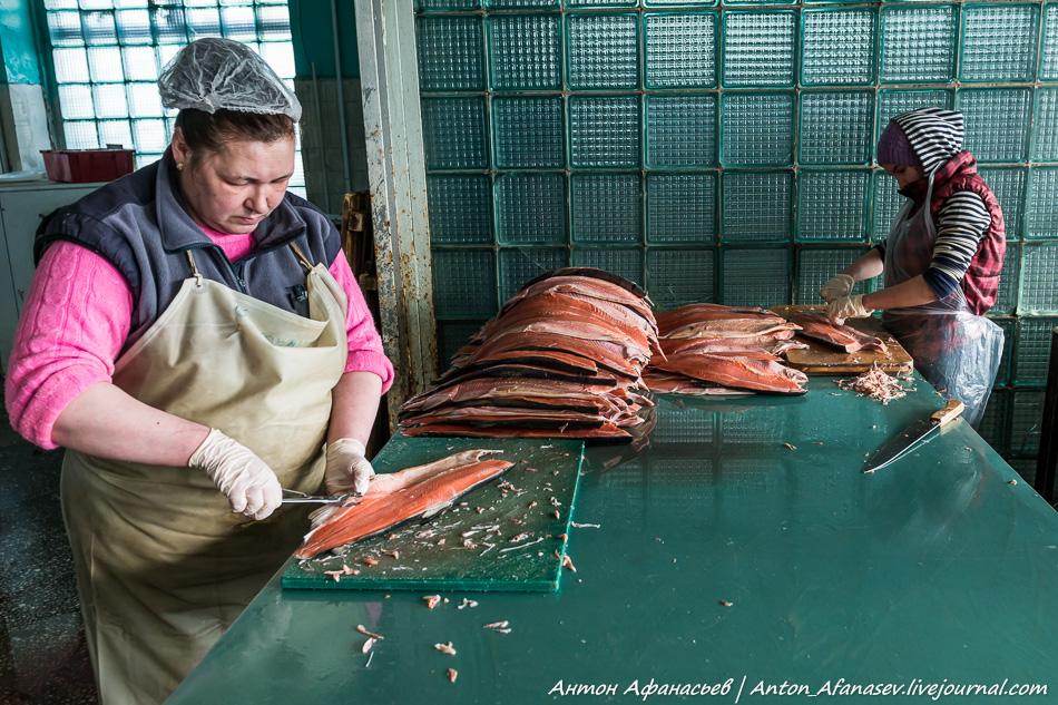 Крестьянско-фермерское хозяйство Чиги Чинах, Магадан