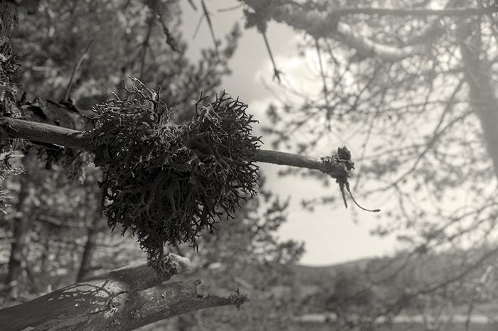 View at Flickr