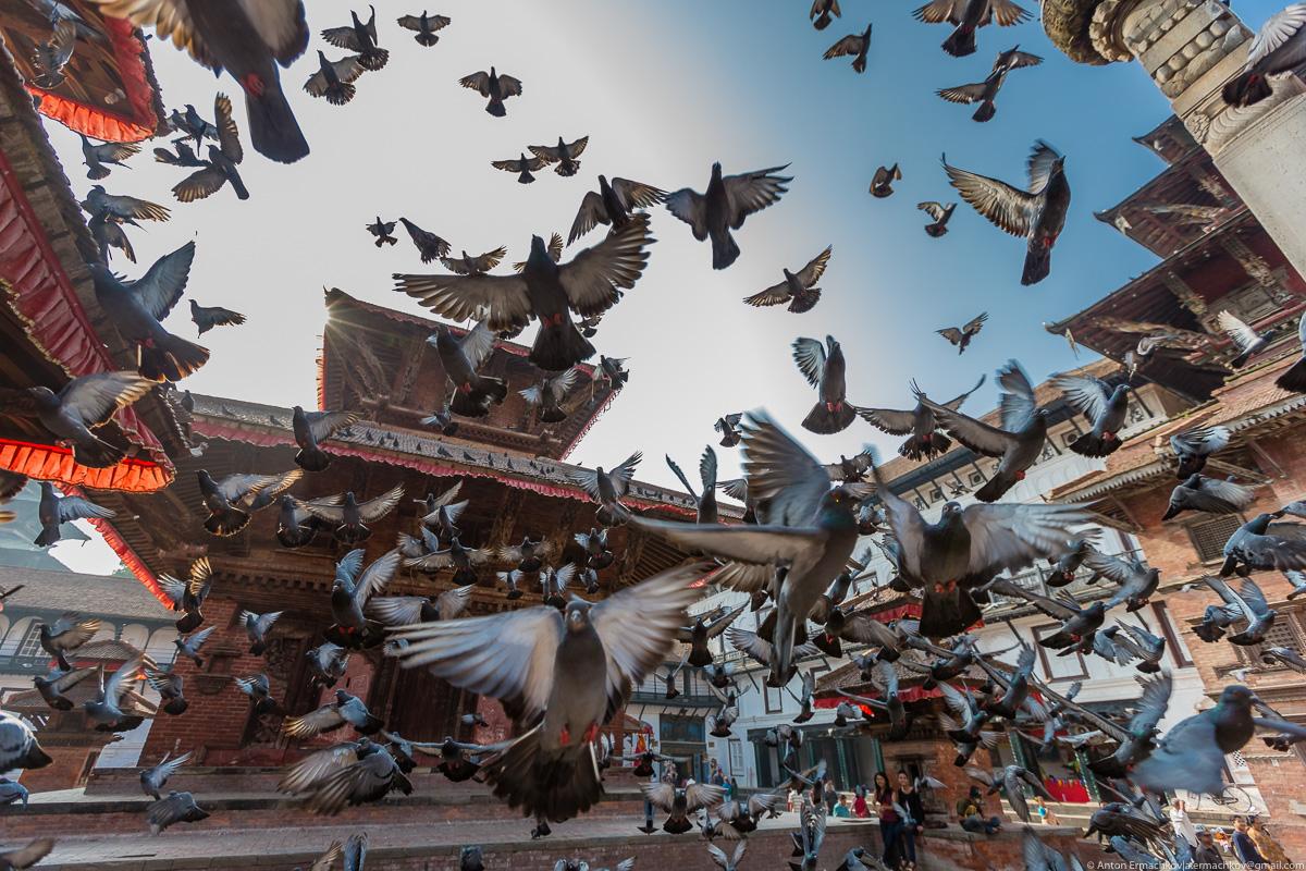 Неизвестные Гималаи. В поисках охотников за медом диких пчёл. Катманду. Площадь Дурбар