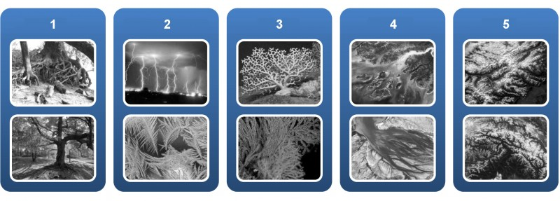 Fig. 4. Branching processes in the environment: 1 – tract of forest; 2 – natural phenomena; 3 – sea animals; 4 – river delta; 5 – rock mass