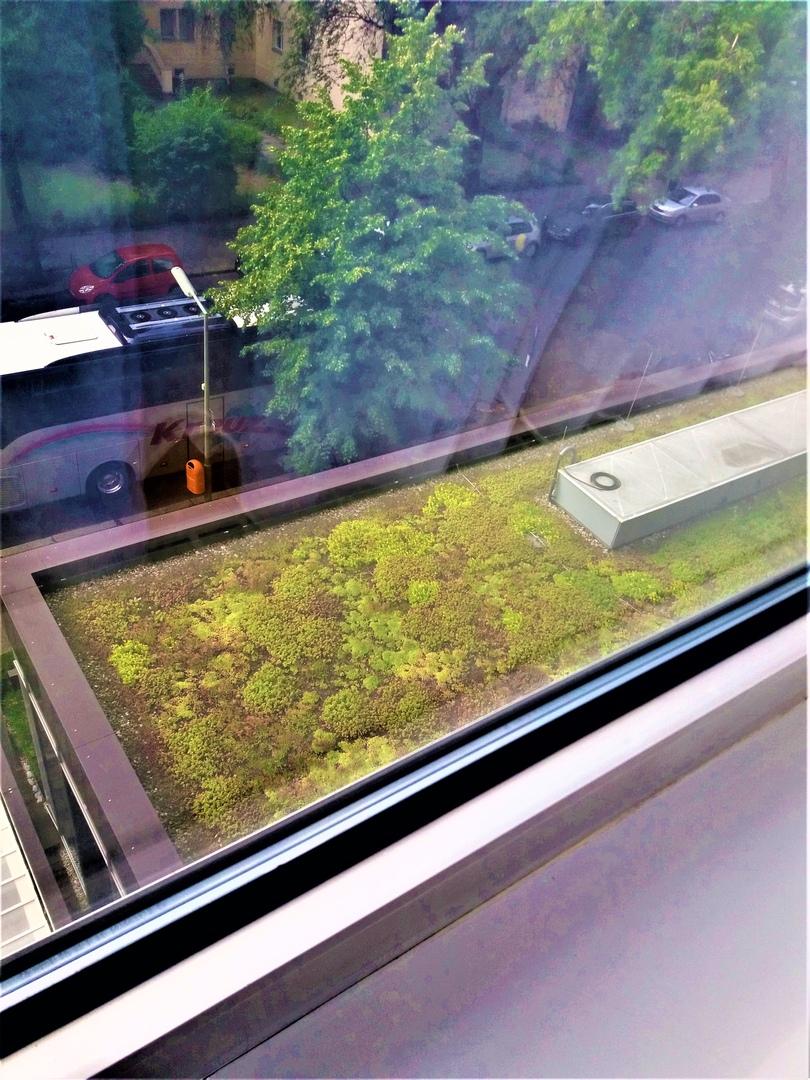 Из окна номера открывается вид на очаровательную зелёную лужайку, расположенную над входной группой
