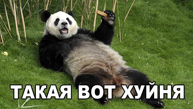 Panda_Huinia