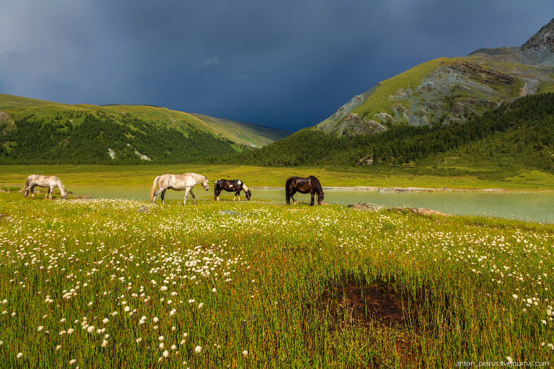 Озеро Аккем, Белуха (4)