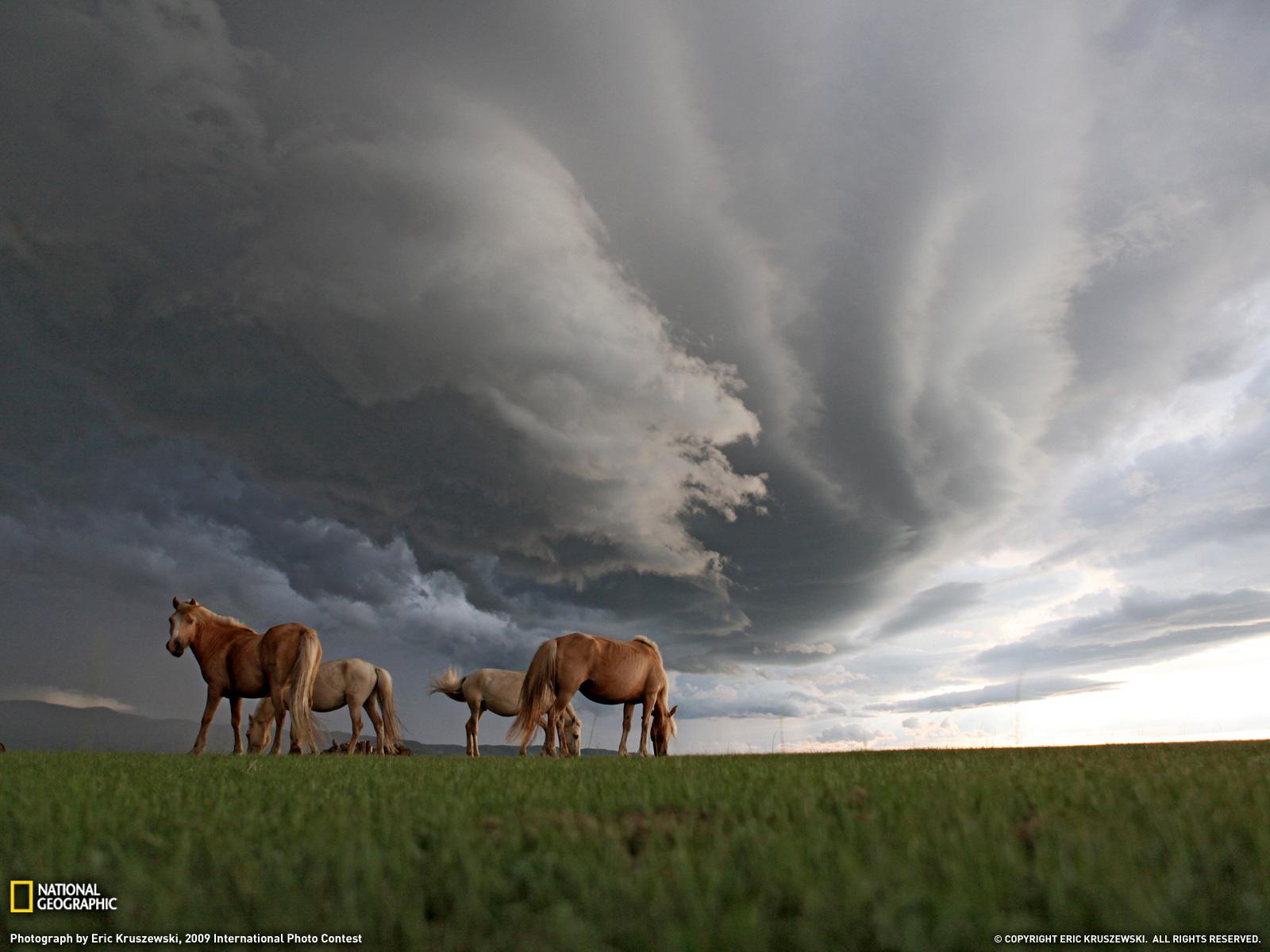 Монголия (2)
