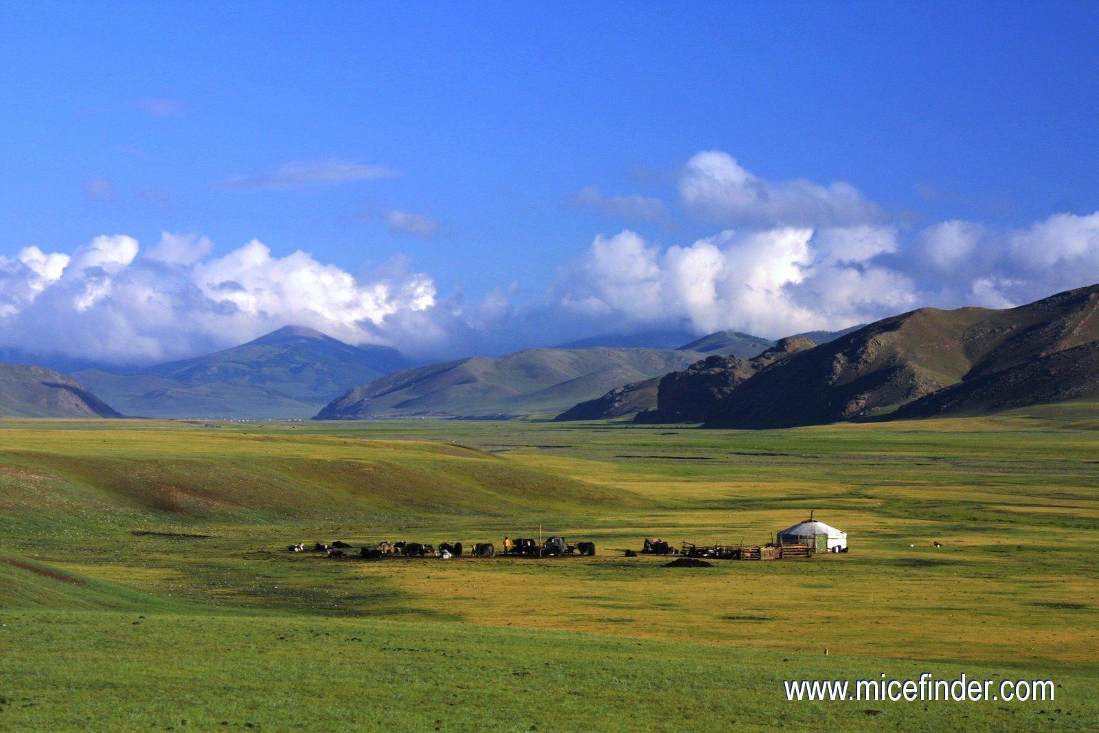 Монголия (12)