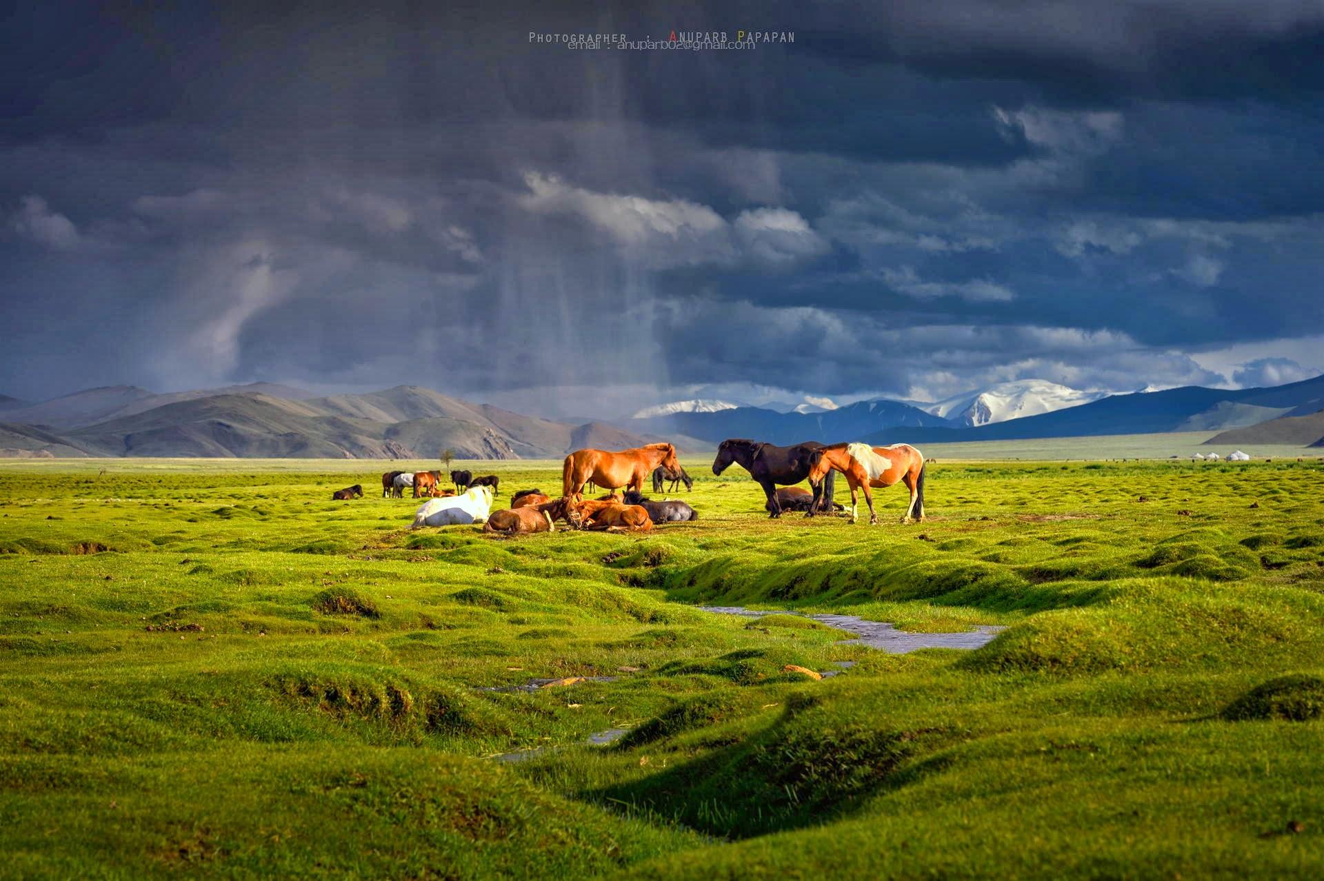 Монголия (14)