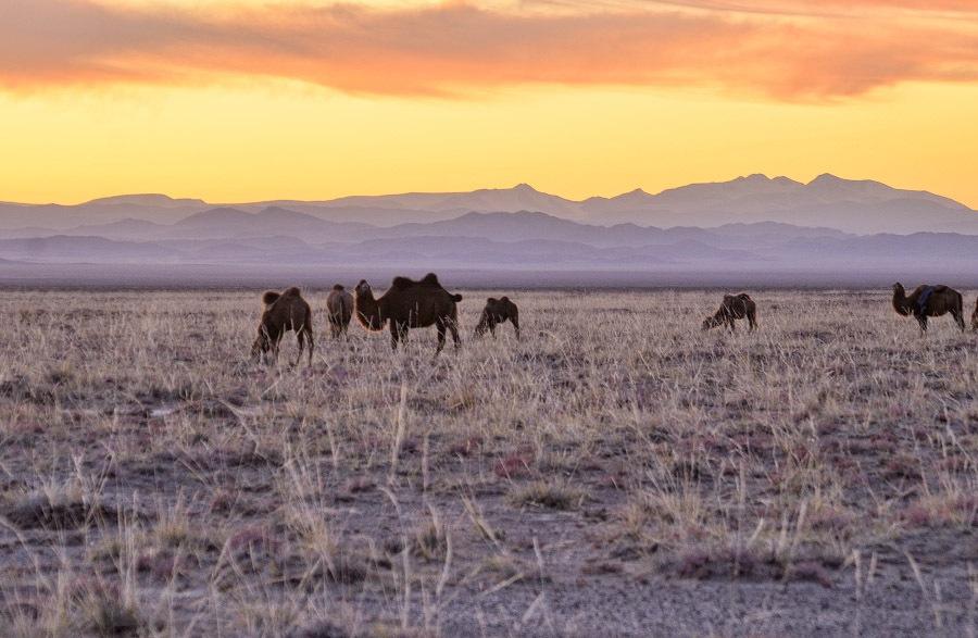 Монголия (18)