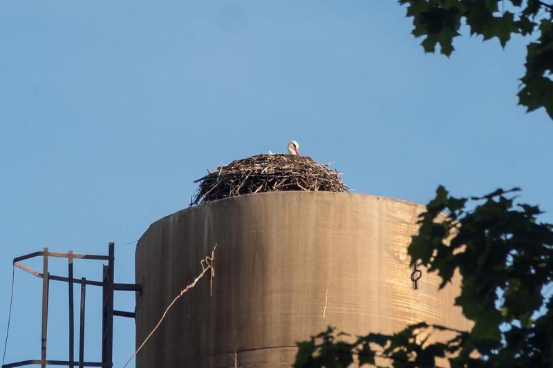 Аист на крыше — быть добру! =)