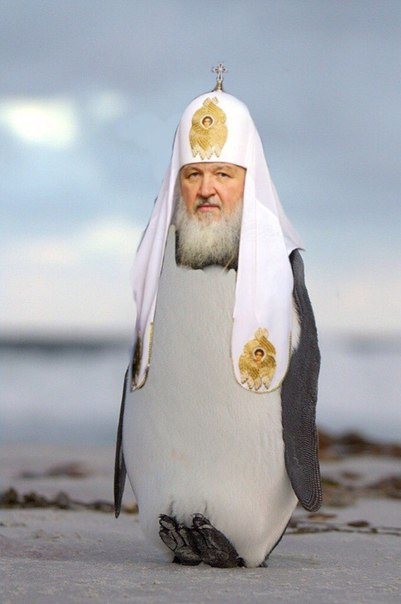 Аналитика: Пернатый патриарх (фоторепортаж)