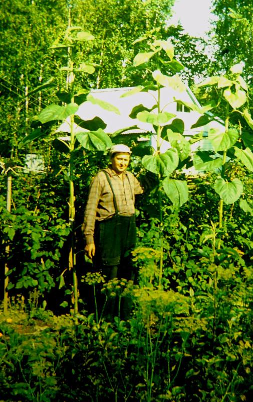 Что выращивали на дачах в Советском Союзе.