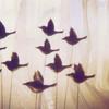 flight in all its variations
