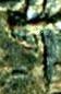 Каменная могила 954 - рубеж
