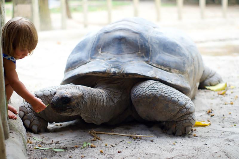 3. Алиса с той самой черепахой в Сиингапуре
