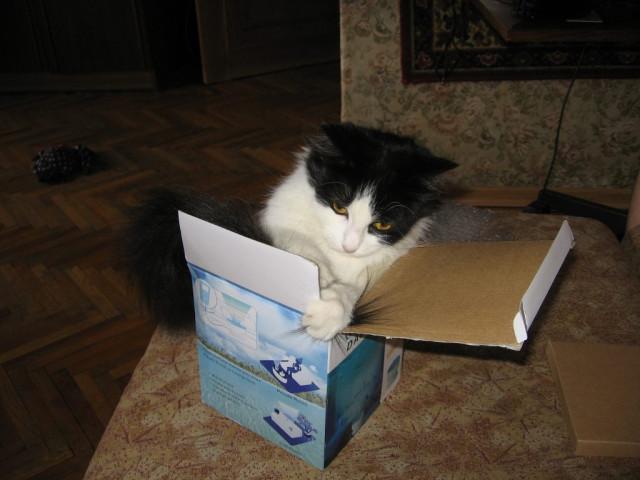 Да, коробочки тоже любит