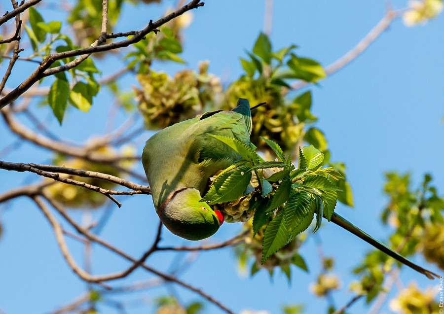 бакупопугай (5 of 30)