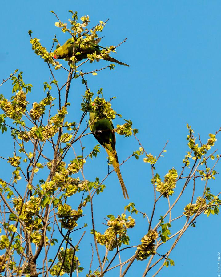 бакупопугай (27 of 30)
