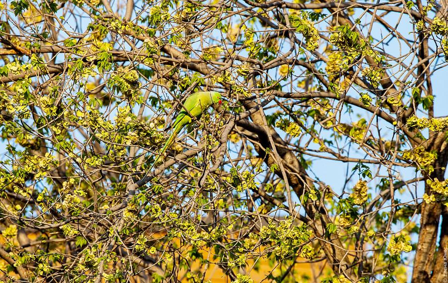 бакупопугай (30 of 30)