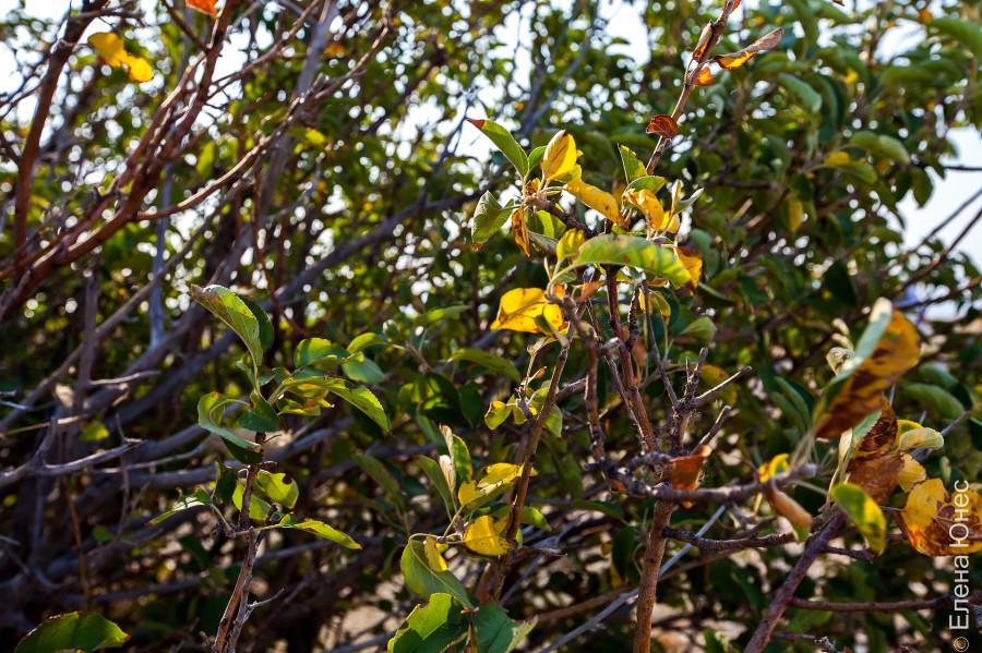 аралцветы1 (27 of 75)