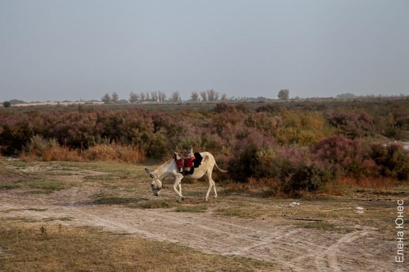 donkey (6 of 35)
