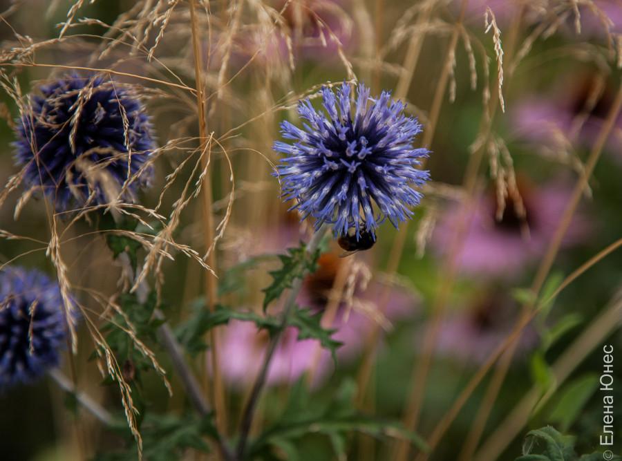 городские цветы (28 of 45)