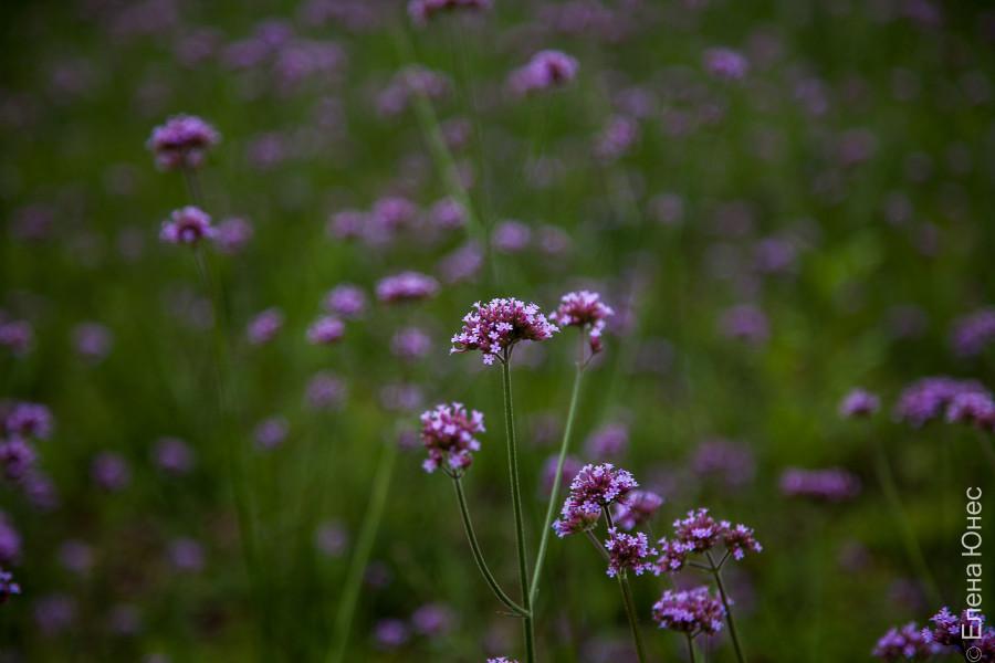 городские цветы (3 of 45)