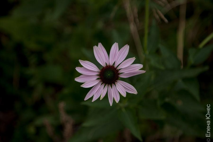 городские цветы (30 of 45)