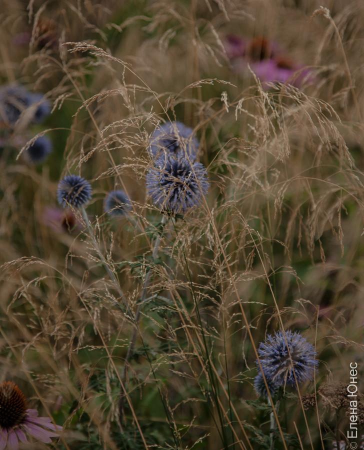 городские цветы (20 of 45)
