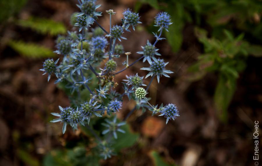 городские цветы (2 of 45)