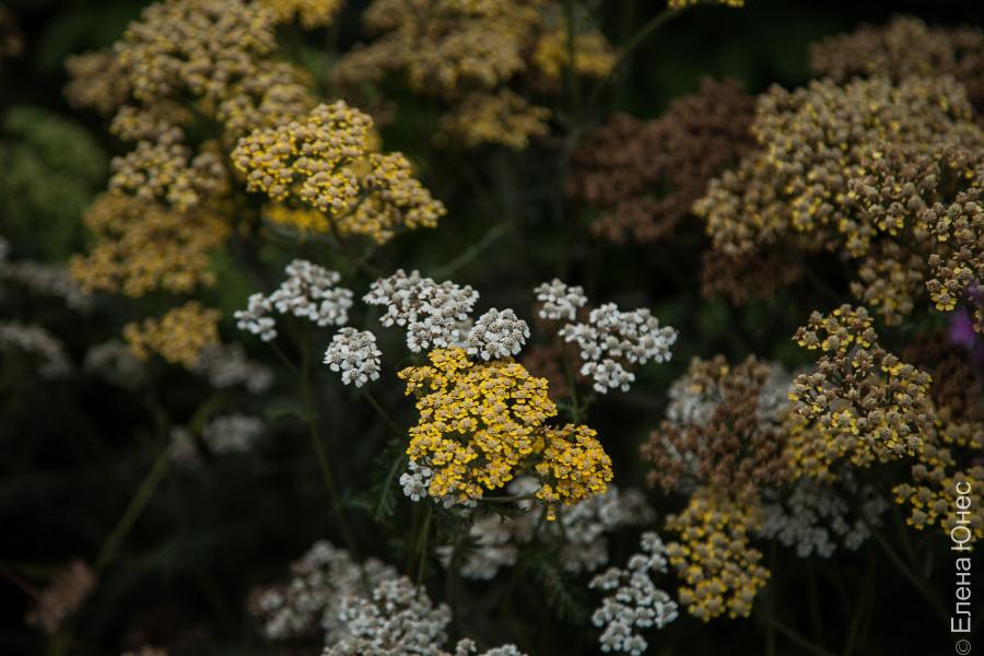 городские цветы (40 of 45)