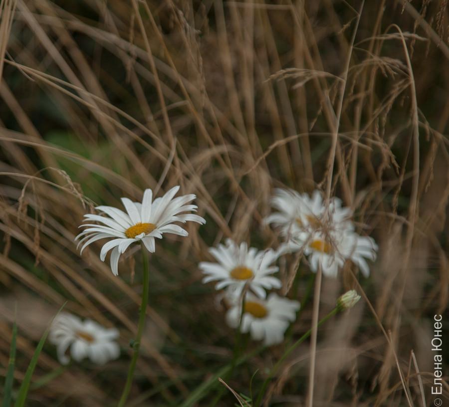 городские цветы (38 of 45)