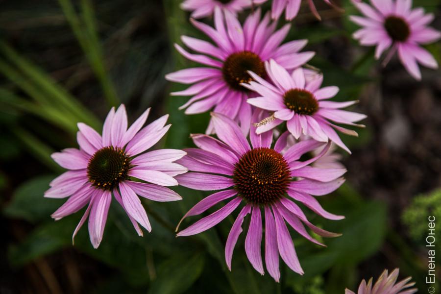 городские цветы (11 of 45)