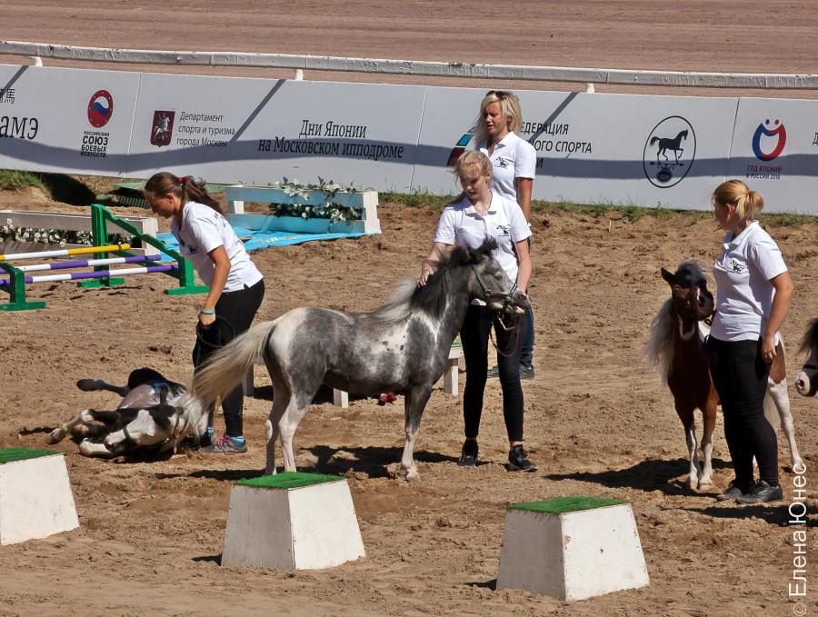 маленькие лошадки (19 of 32)