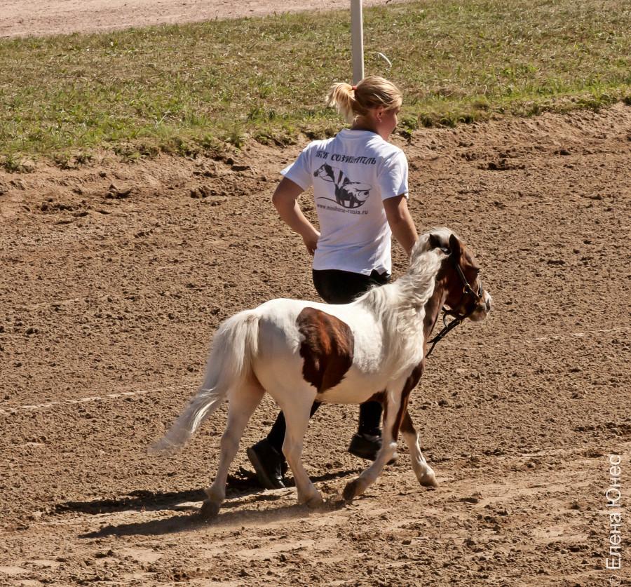 маленькие лошадки (32 of 32)