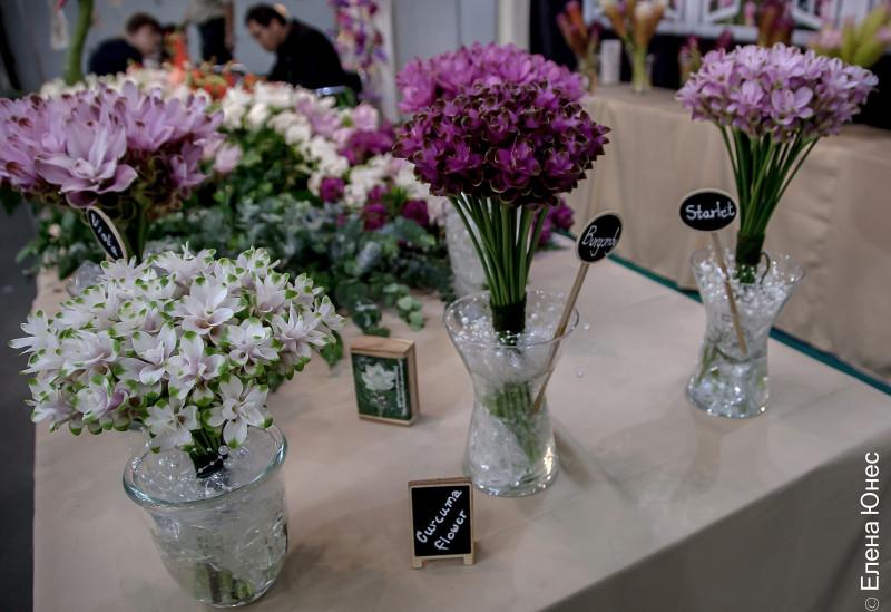 сиамский тюльпан (8 of 12)