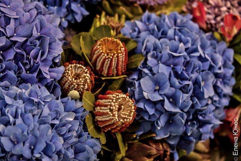 крокусцветы1 (69 of 77)