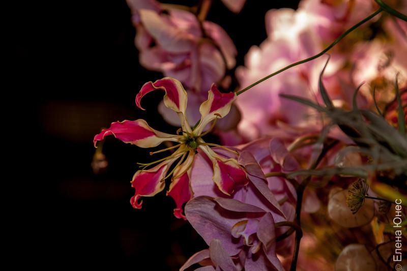 крокусцветы2 (81 of 81)