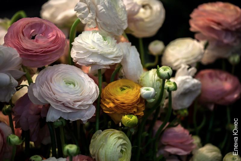 крокусцветы1 (37 of 77)
