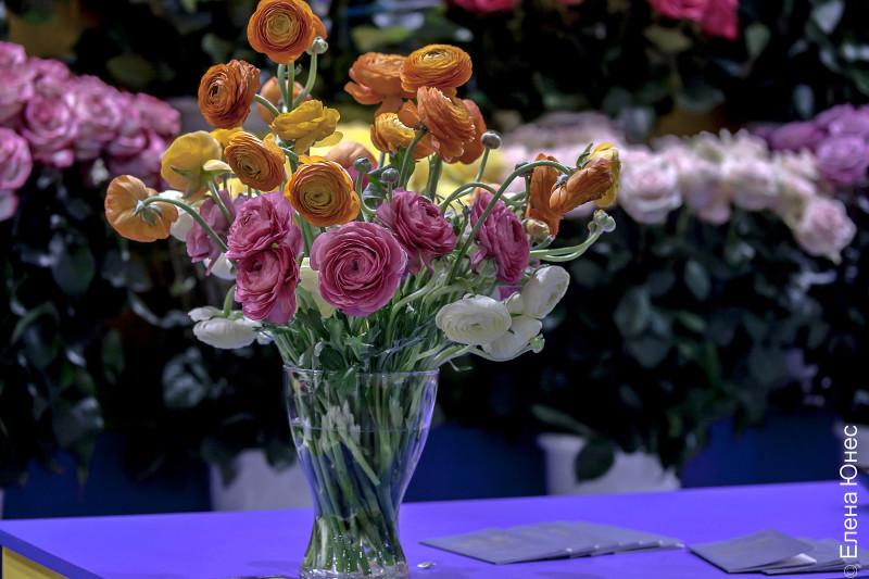 крокусцветы1 (40 of 77)