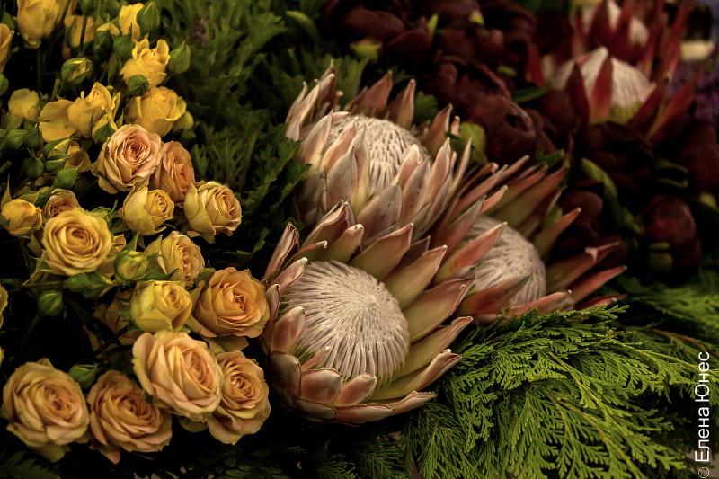крокусцветы1 (64 of 77)