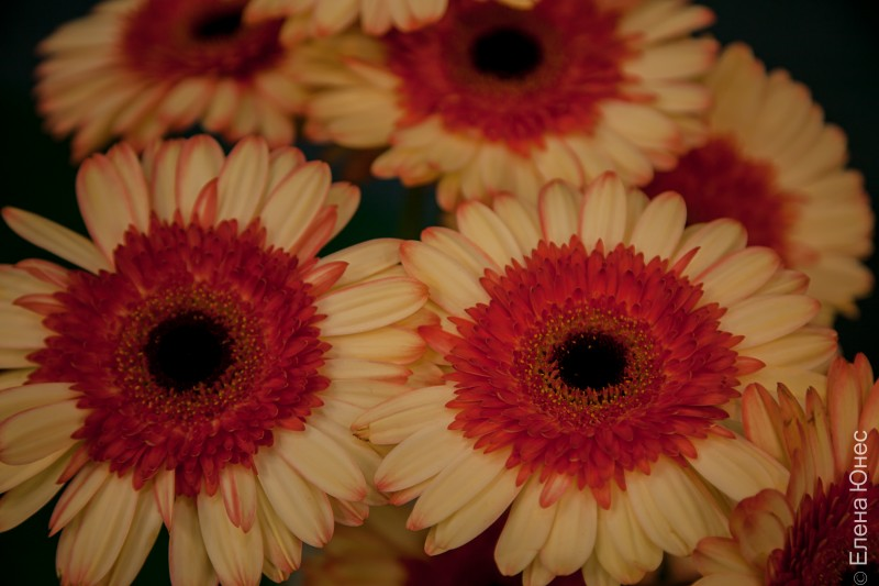 крокусцветы2 (60 of 81)