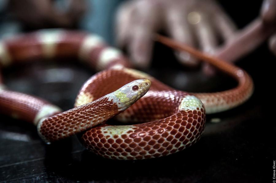 змейки (17 of 67)