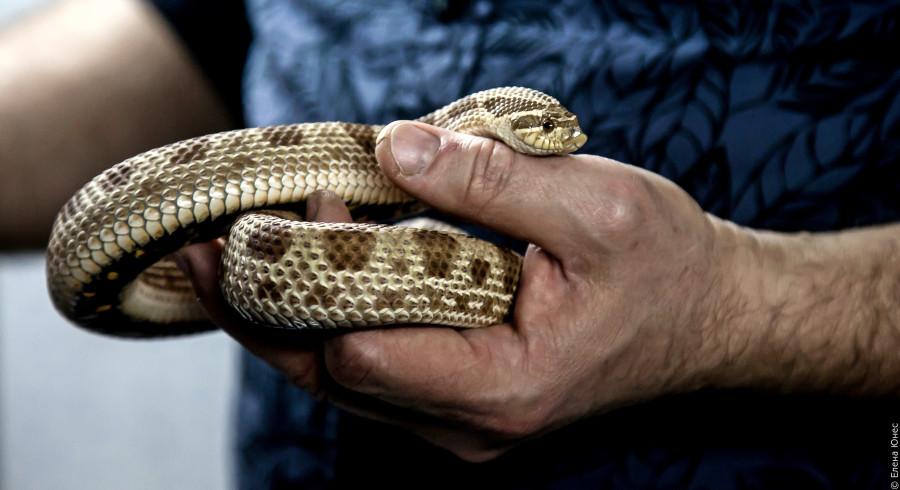змейки (27 of 67)