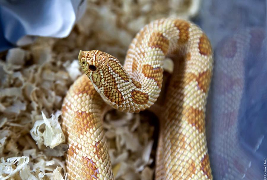 змейки (31 of 67)