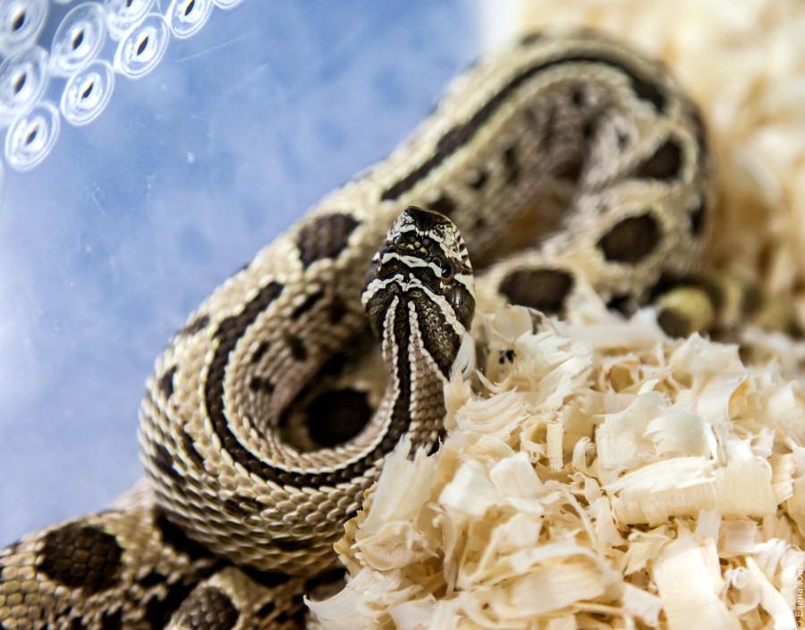 змейки (33 of 67)