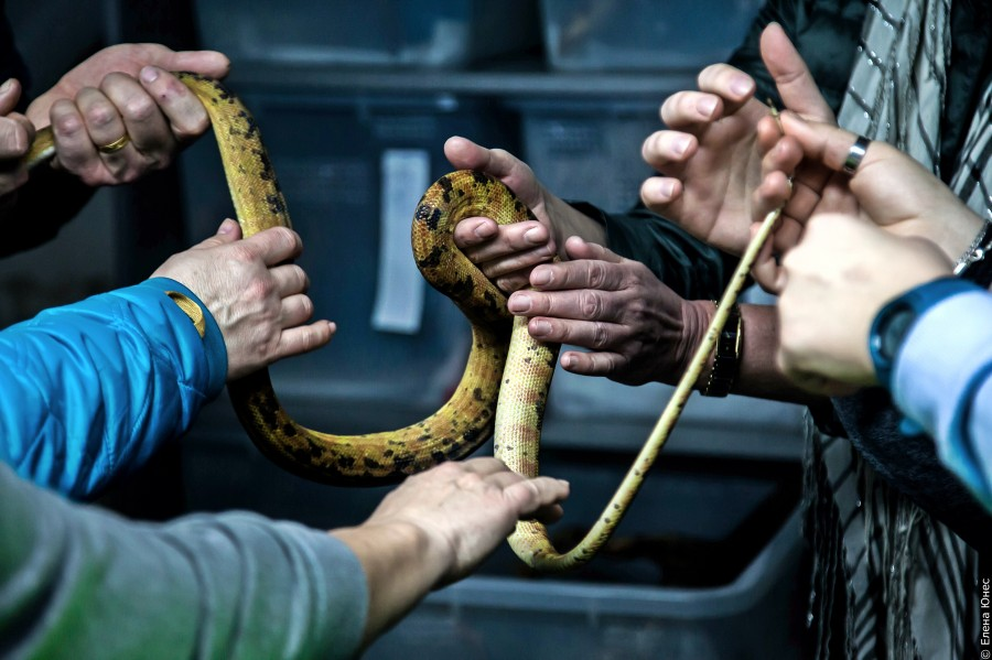 змейки (62 of 67)